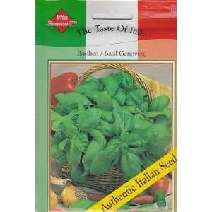 Genovese Basil Basilico   4000 Seeds   Taste of Italy