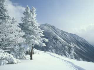 Snow Covered Trees and Snowshoe Tracks, White Mountain National Forest