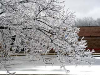 Tree Branches After an Ice Storm Photographic Print by Dennis