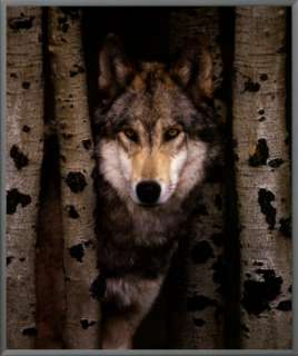 Wisdom Gray Wolf Framed Canvas Print at AllPosters