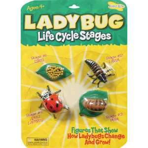 Ladybug Life Cycle Stages: Office Products